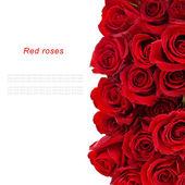 Fényképek Csokor vörös rózsa, elszigetelt fehér háttér felett