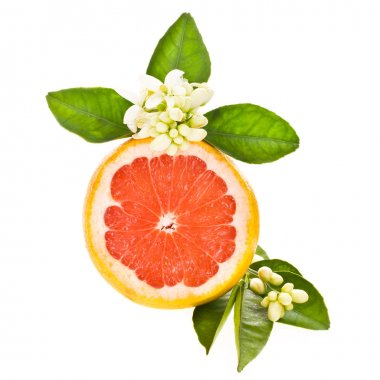 Citrus fruit - grapefruit