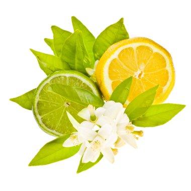 Cut citrus fruits - lemon and Lima