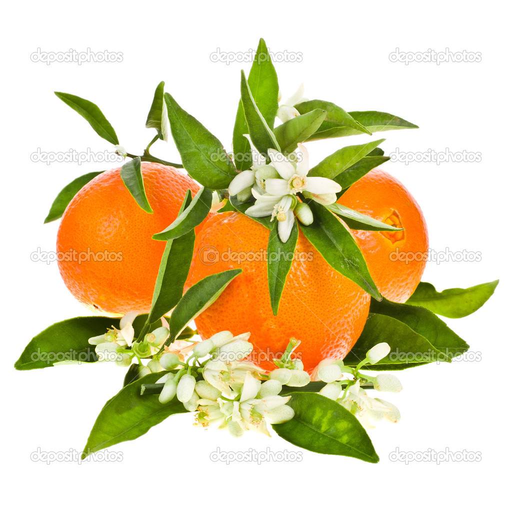 Orange tree flowers on a orange fruit — Stock Photo ...