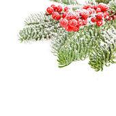 Vánoční motivy a větve
