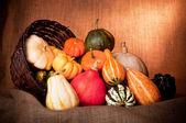 Colorful mini pumpkins
