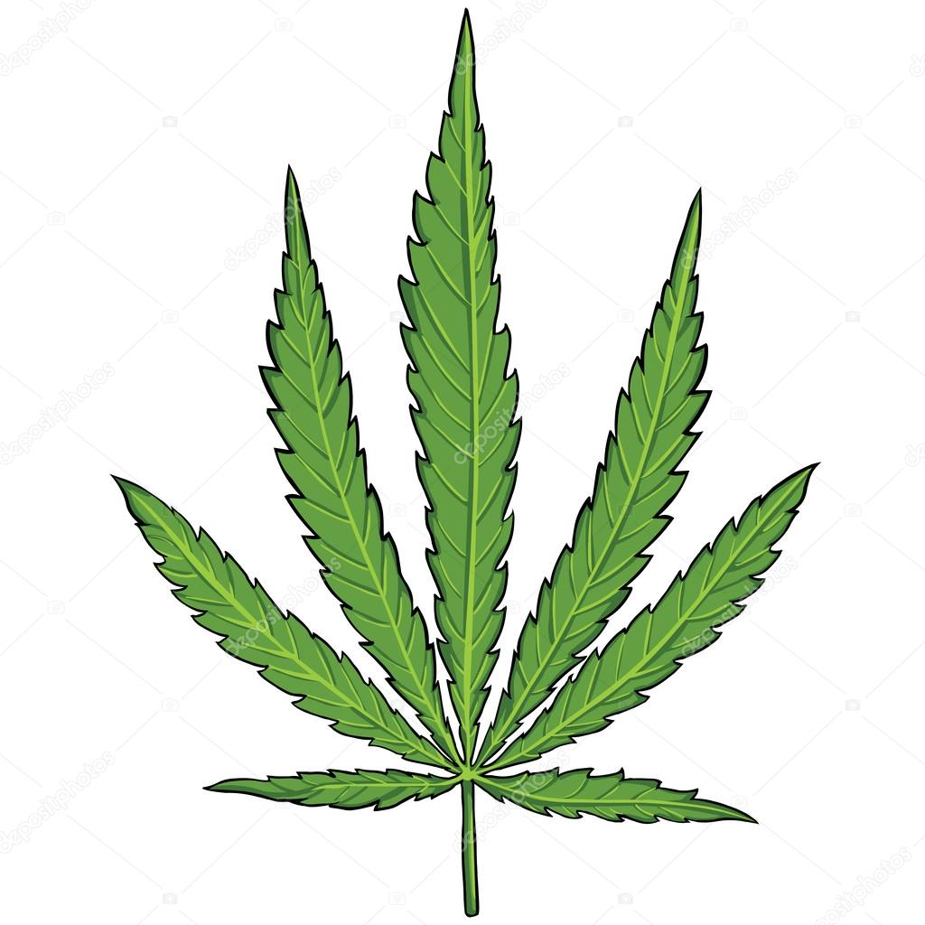 Vector green cannabis leaf
