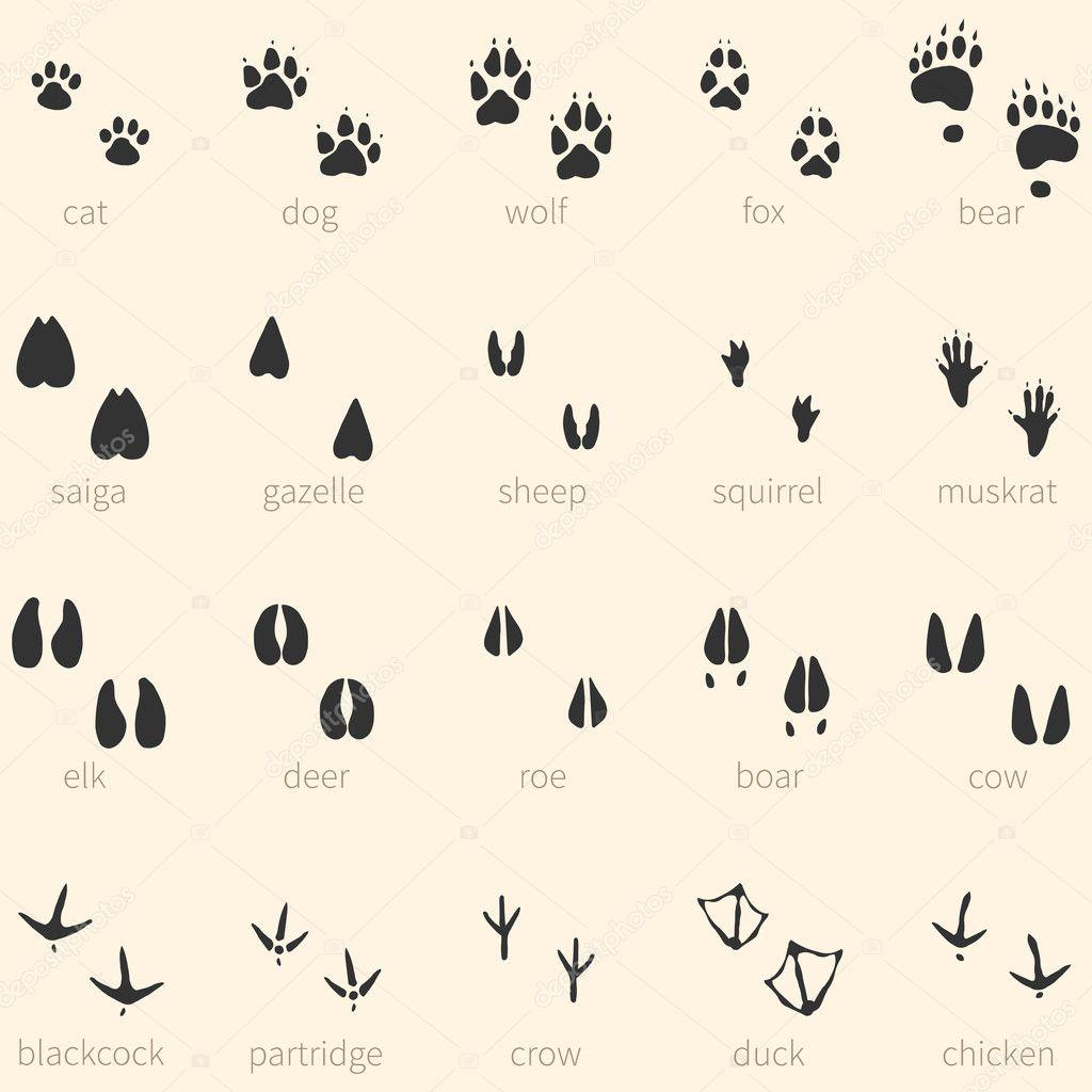 20 動物足跡アイコンのベクトルを設定 — ストックベクター © nikiteev