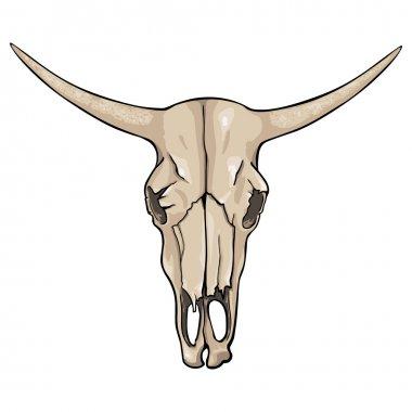 Vector isolated cartoon - old cow skull