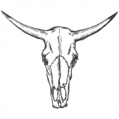 Vector sketch illustration - old cow skull