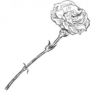 Vector Sketch Illustration - carnation