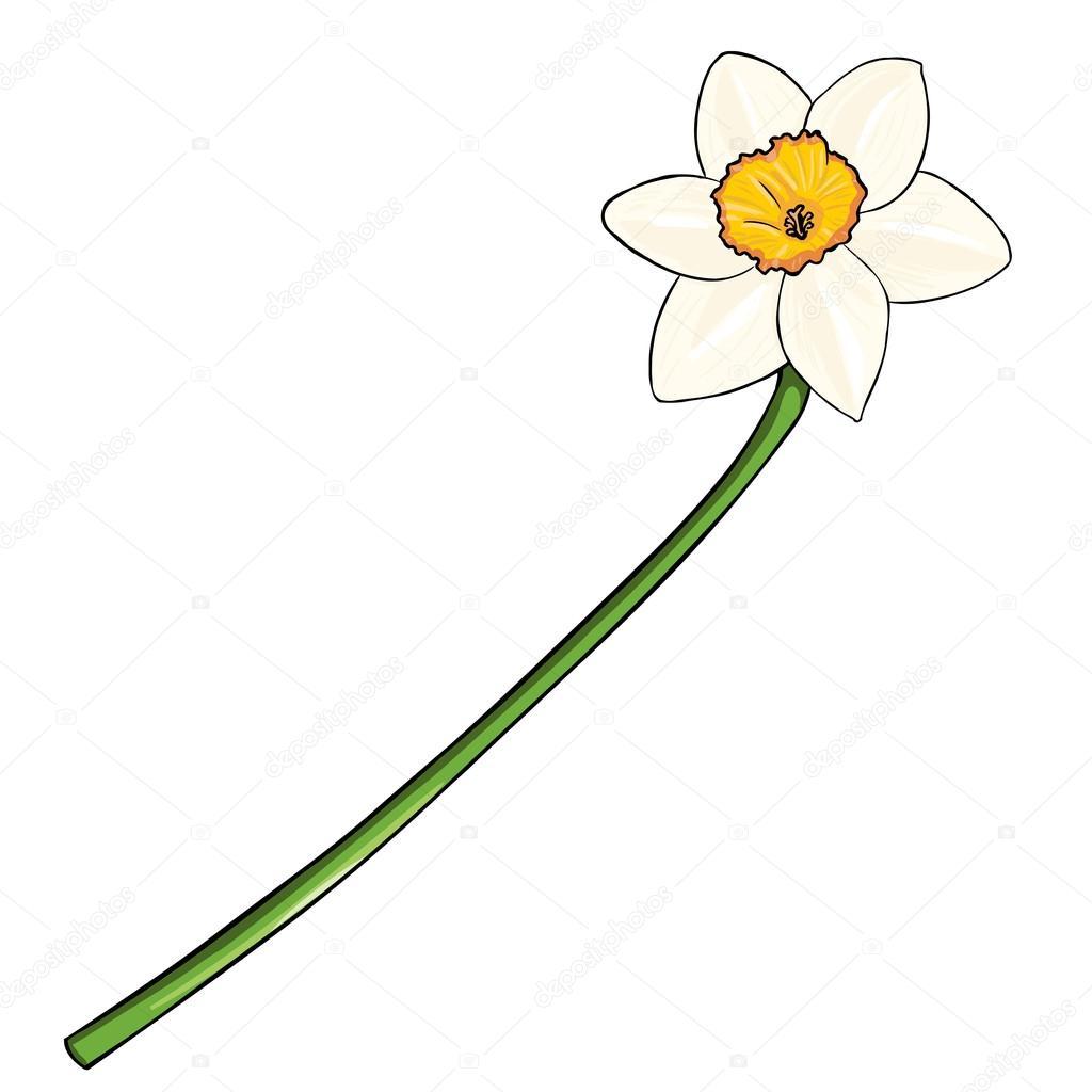 Vector Cartoon Isolated Illustration - Narcissus