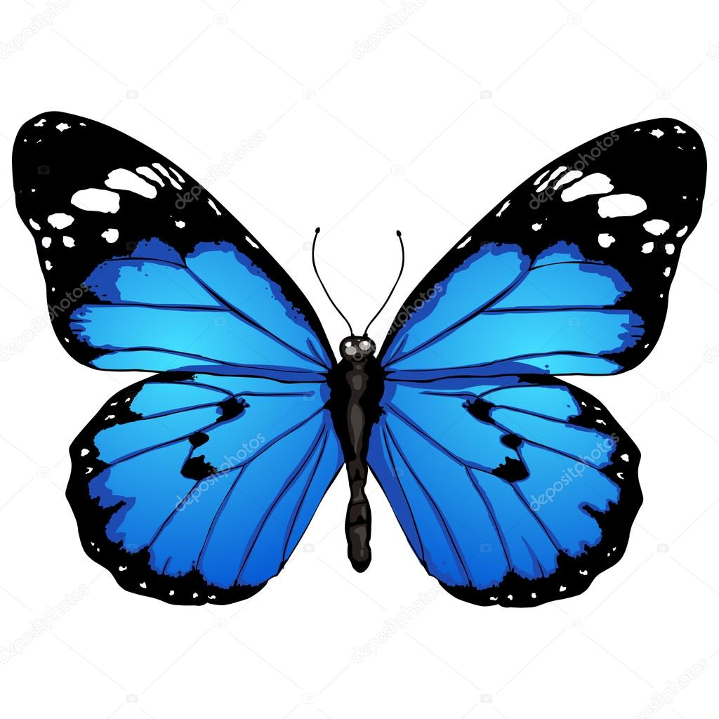 papillon dessin anim u00e9 image vectorielle nikiteev  u00a9 50457295 free butterfly clipart png yellow butterfly clipart png