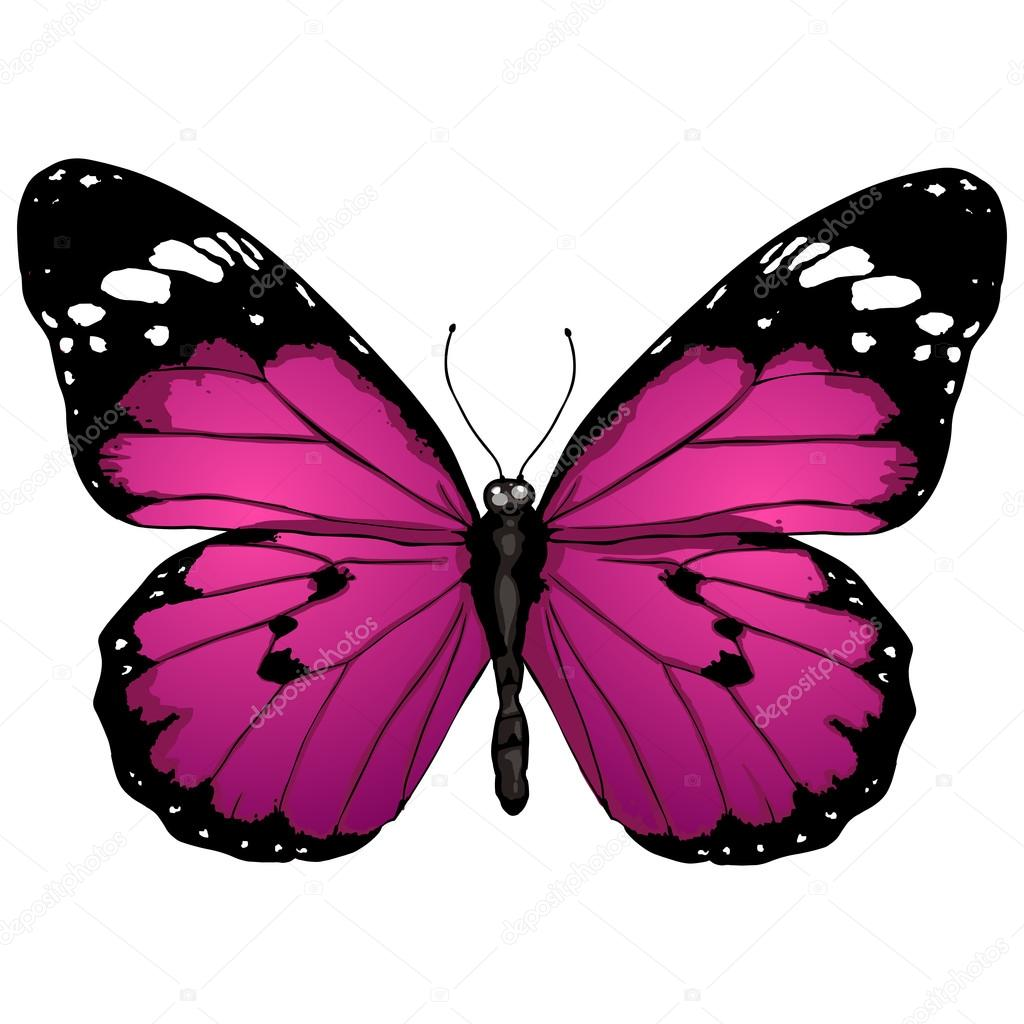 mariposa monarca dibujo para colorear butterfly clipart coloring pages Butterfly Clip Art Black and White