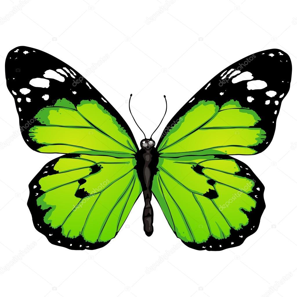 dibujos mariposa animados mariposa de dibujos animados vector