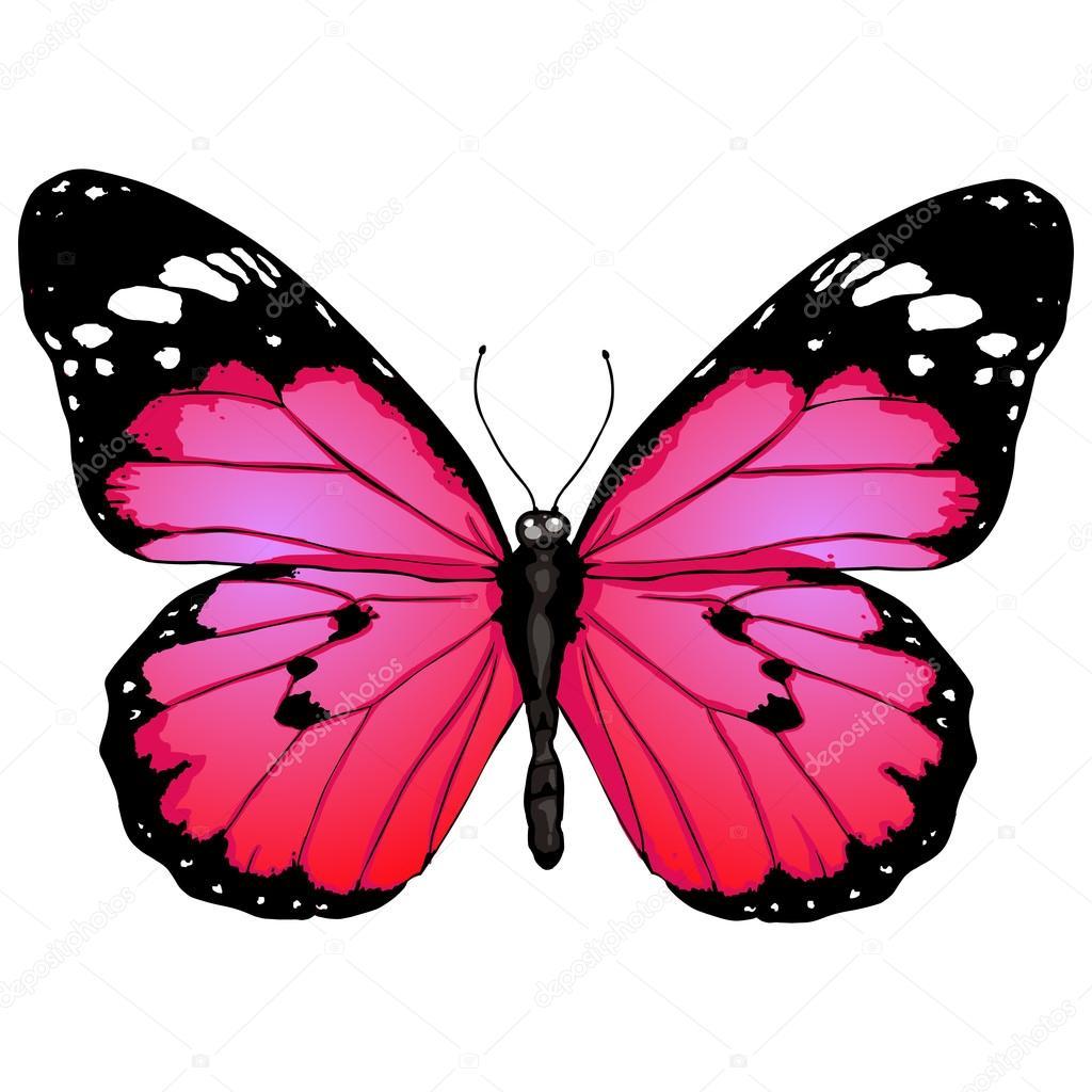 Papillon dessin anim image vectorielle nikiteev 50457467 - Dessins papillons ...