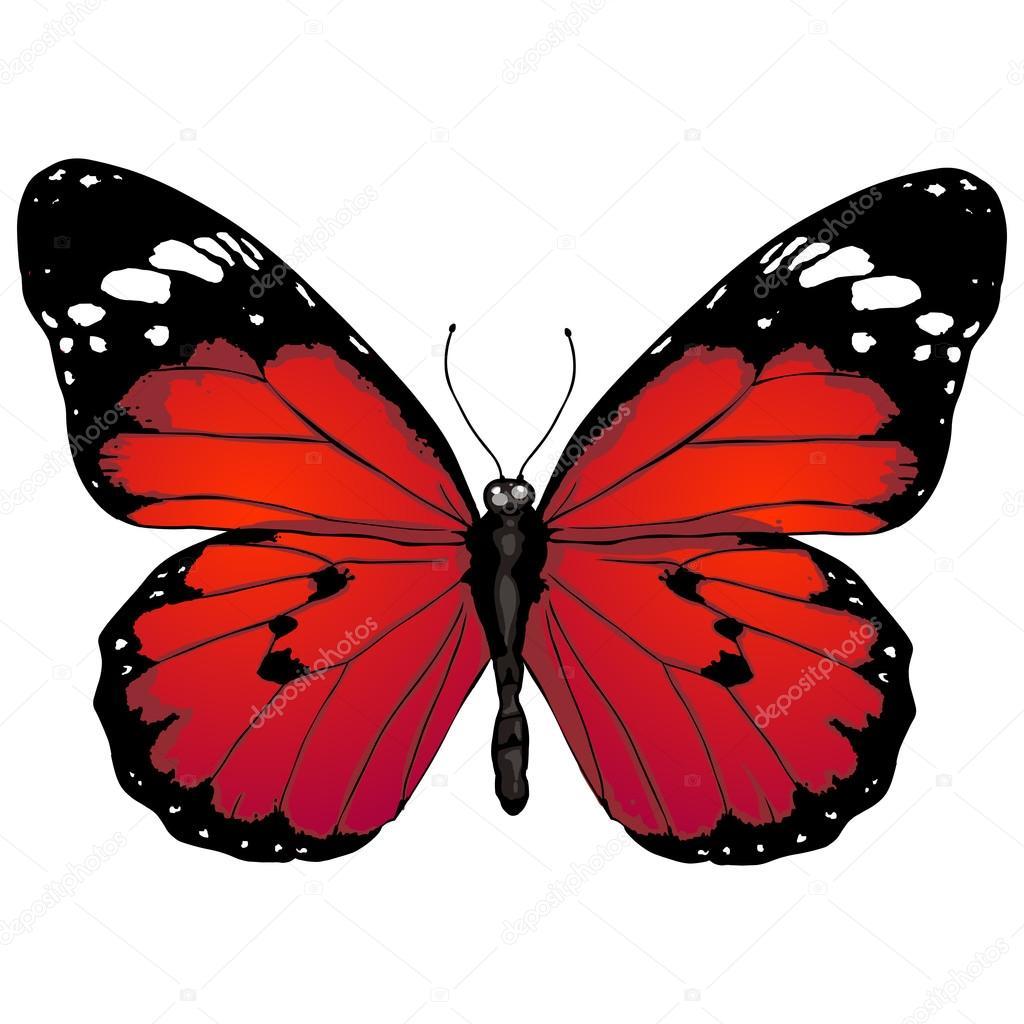 papillon dessin anim image vectorielle nikiteev 50457845. Black Bedroom Furniture Sets. Home Design Ideas