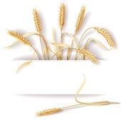 Uši pšenice