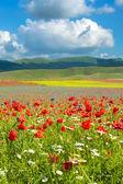 Fotografie Beautiful full color spring flowers in Umbria, Italy