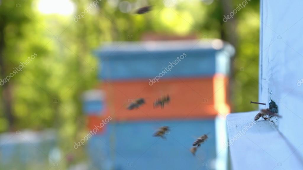 Busy Summer Bees
