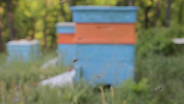 včely v přírodě