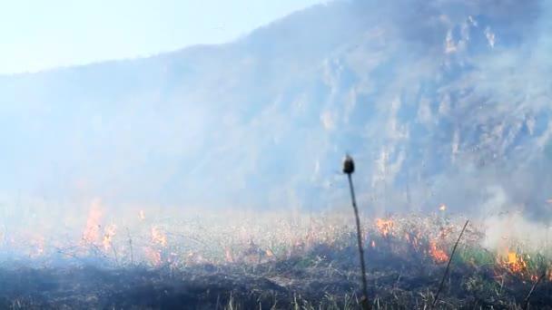 Wald Feuer Verwüstung durch Klima Hitze Dunst Charakter ändern