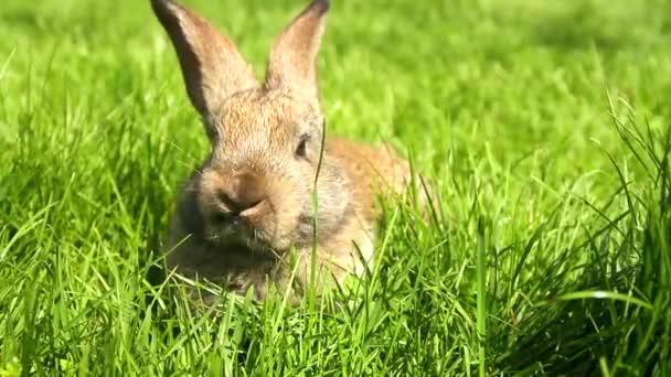 Rabbit on green grass