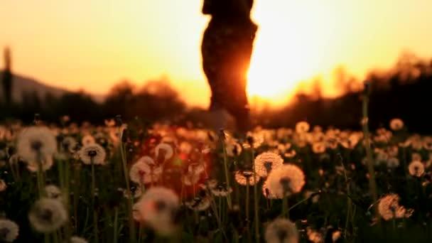Gyönyörű fiatal nő hippi ruha futó pitypang mező naplemente