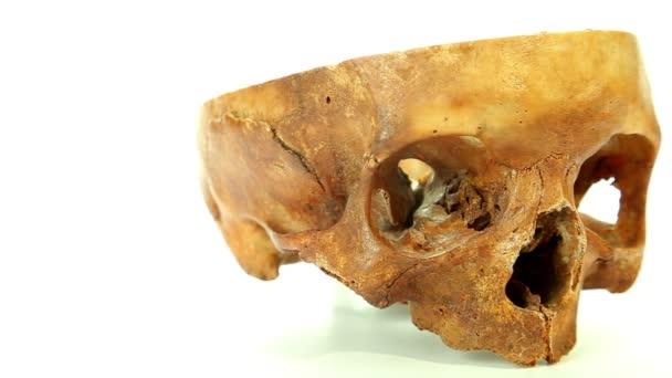 lidská lebka izolovaných na bílém pozadí pro lékařské vzdělávání