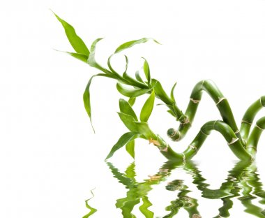 bamboo branches in water