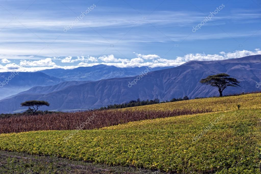 Agriculture in the Andean highlands