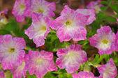 Růžový květ na zeleném pozadí
