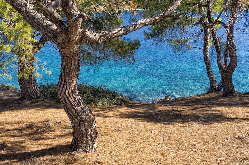 View to the sea through the trees in Sithonia, Chalkidiki, Greece
