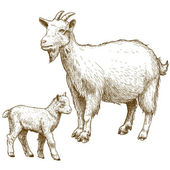 Fotografie Vector illustration of engraving goat and kid