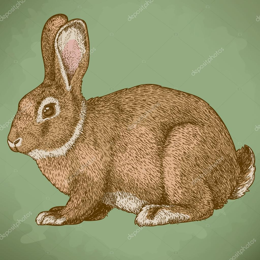 vector engraving rabbit in color