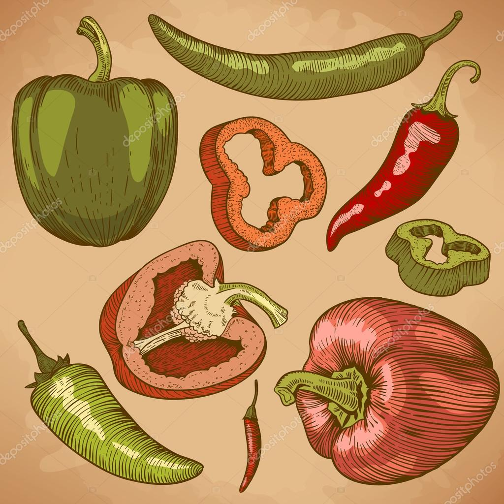 Engraving illustration of many peppers in color