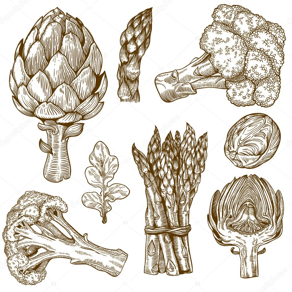 Engraving illustration of green vegetables