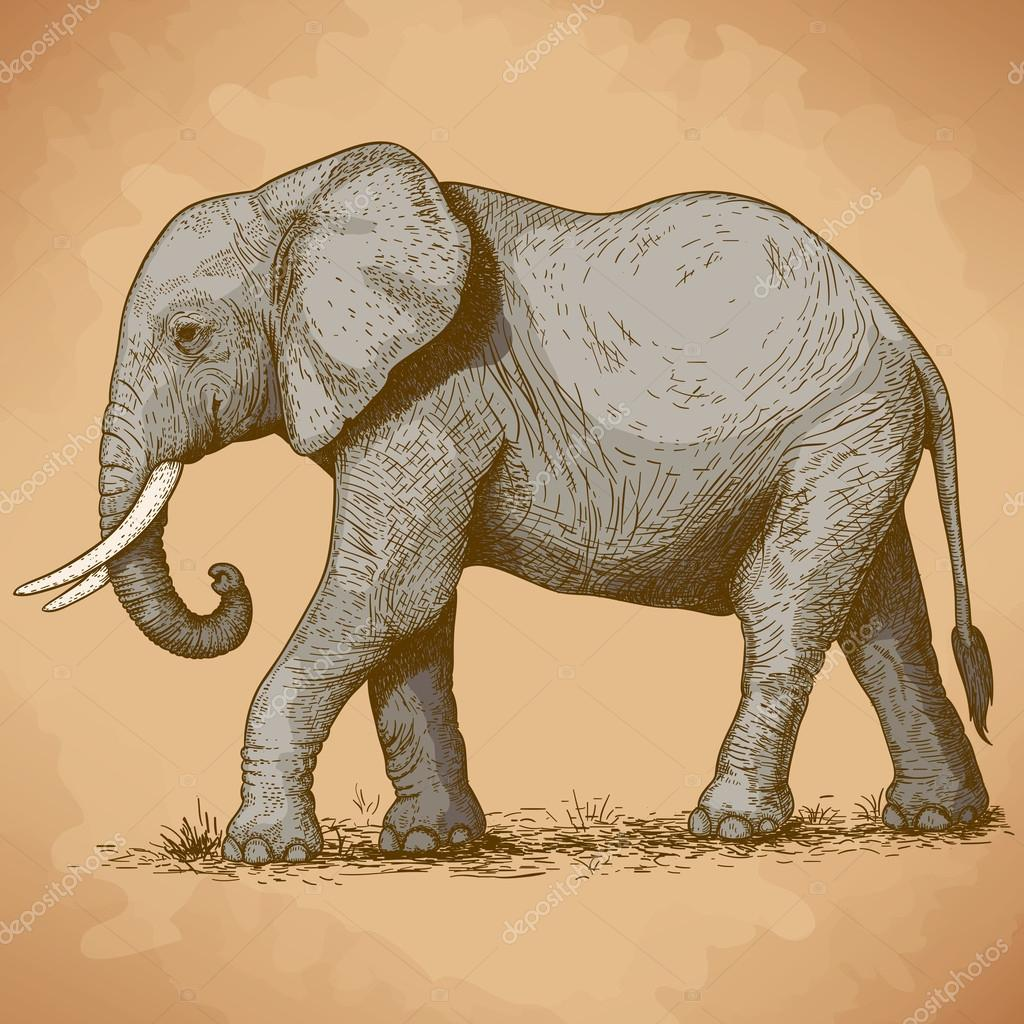 vector illustration of engraving elephant