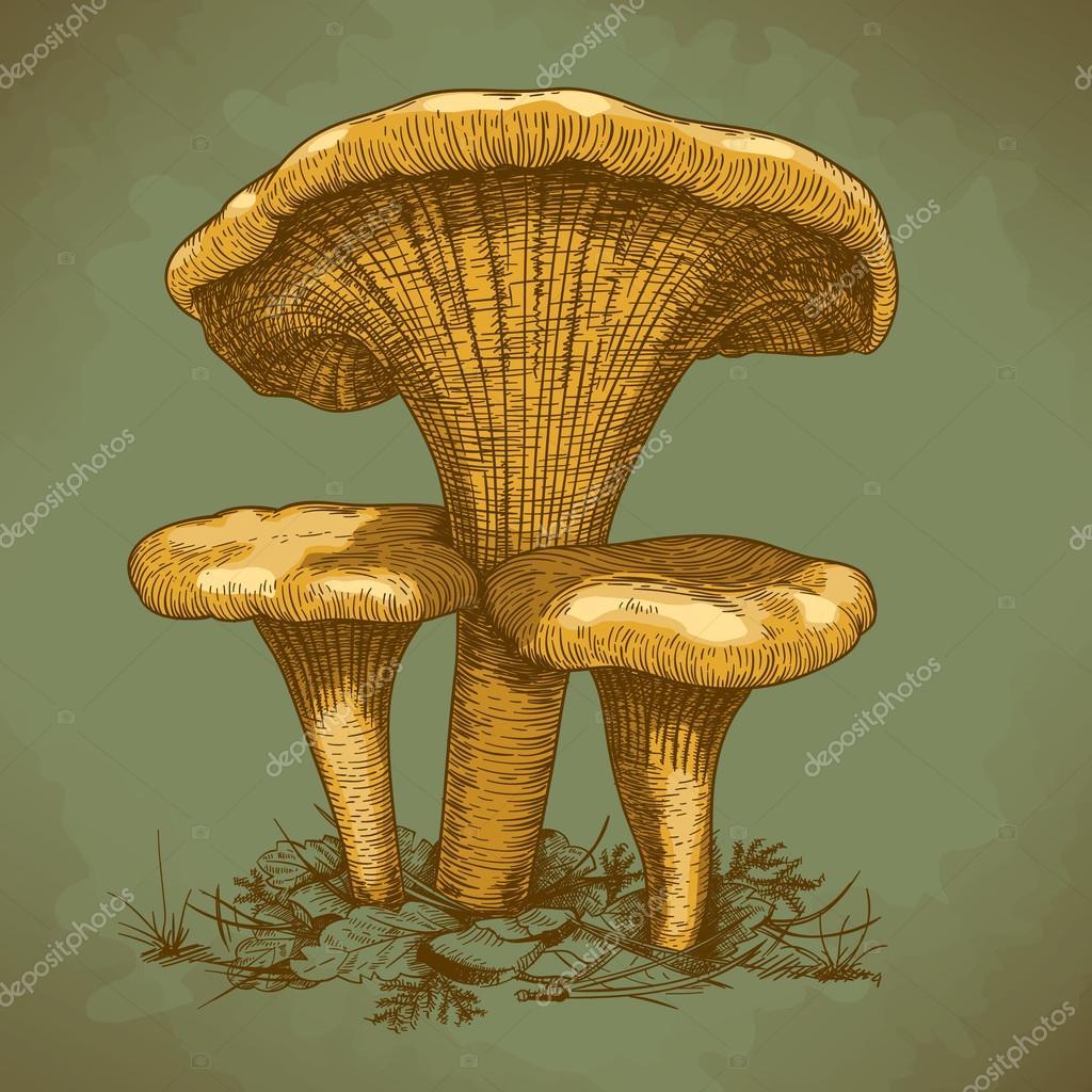 Engraving illustration of three mushrooms