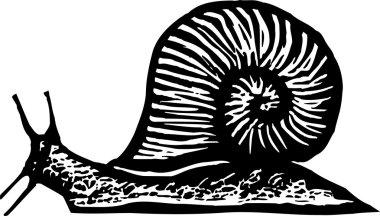 Woodcut Illustration of Garden Pest - Snail