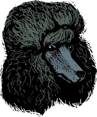 Woodcut Illustration of Poodle Dog Face