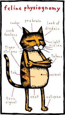 Woodcut Illustration of Feline Physiognomy