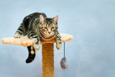 Tabby cat sits on a tower