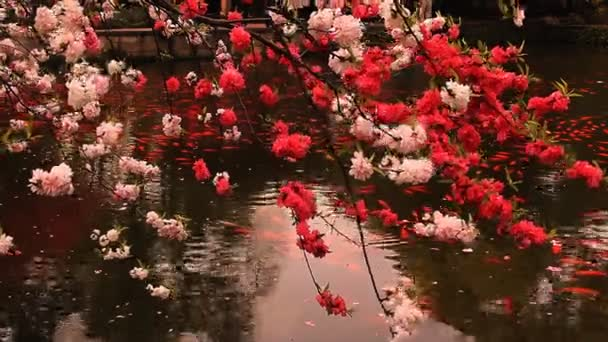 Blossoming cherry with goldfishes.