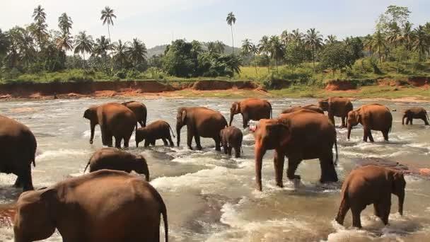 az anya elefánt borjú megközelítése.