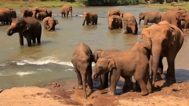 Elephants drink water.