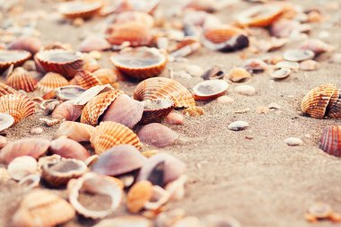 Seashells on the beach sand on a summer day