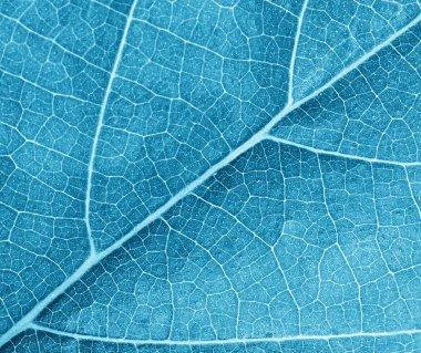 blue leave texture