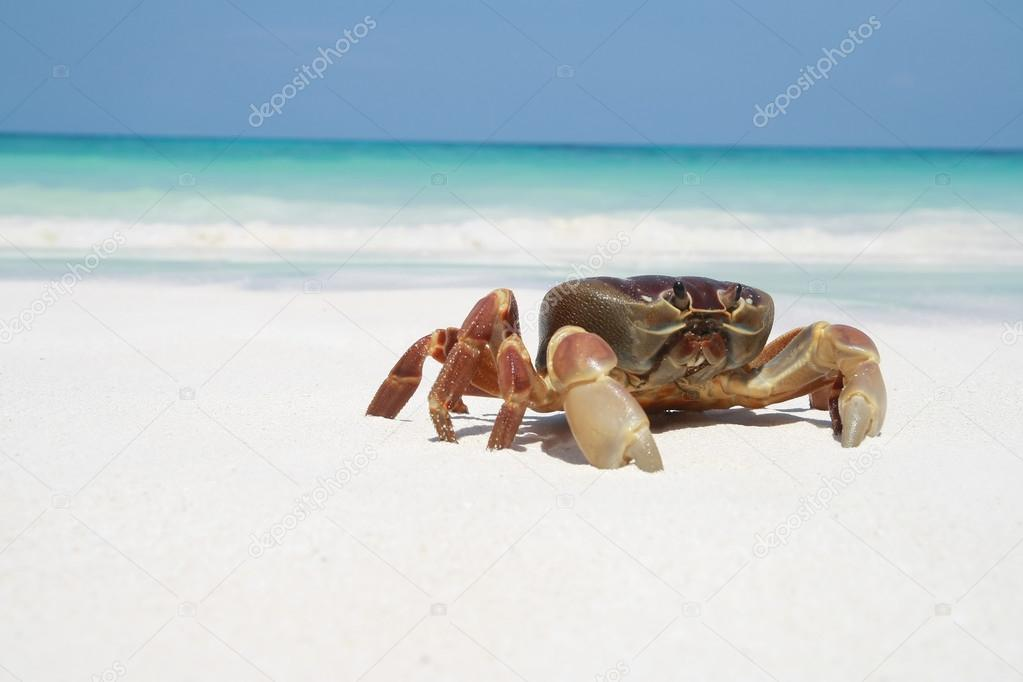 Crab on beach, Thailand