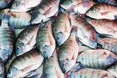 sfondo, di pesce tilapia
