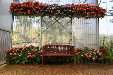 Wood chair in greenhouse