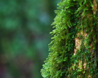 Close up moss on tree , Thailand