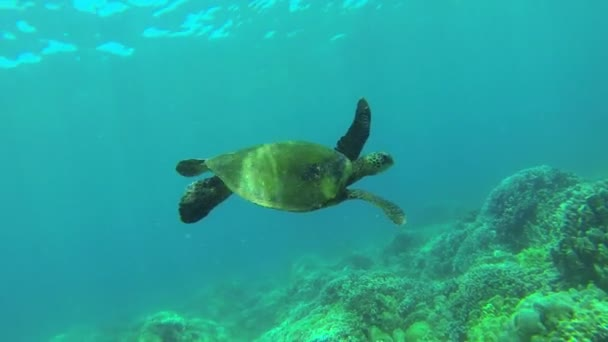 Underwater Turtle Swimming