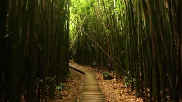 Steadicam výstřel přes Bamboo Forest (Hd)